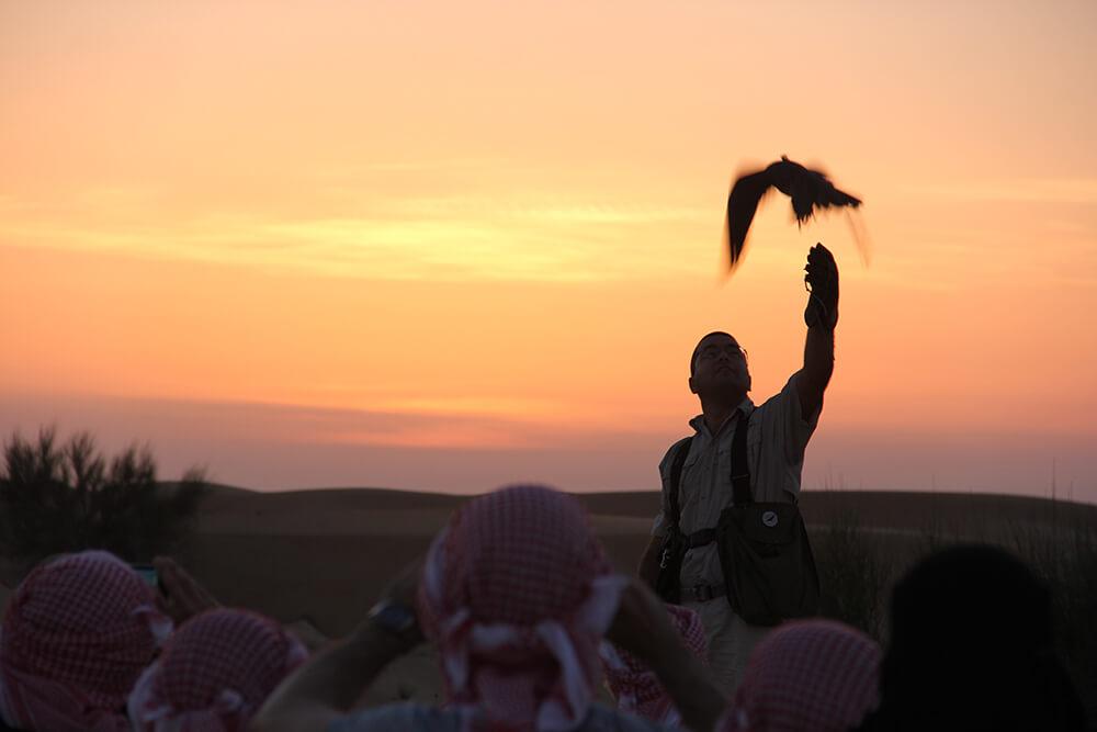 Sunset Falcon Show