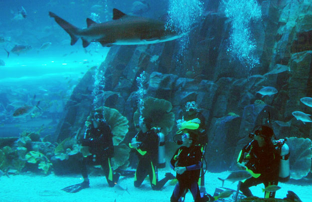 The-Dubai-Mall-Shark-Dive