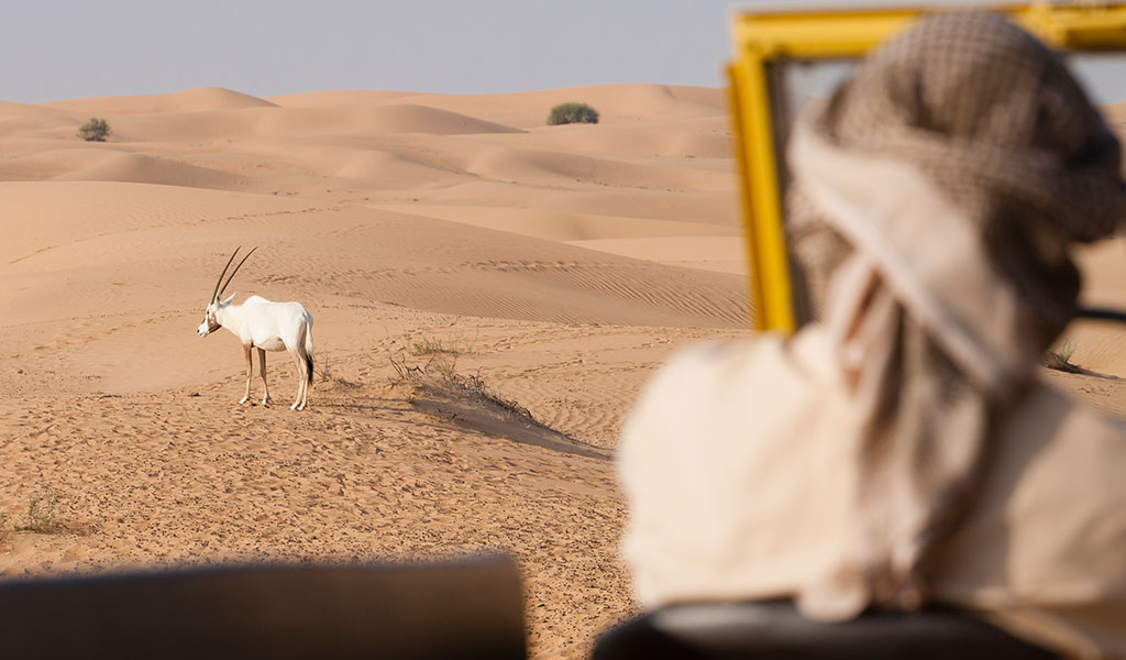 dubai-desert-animals