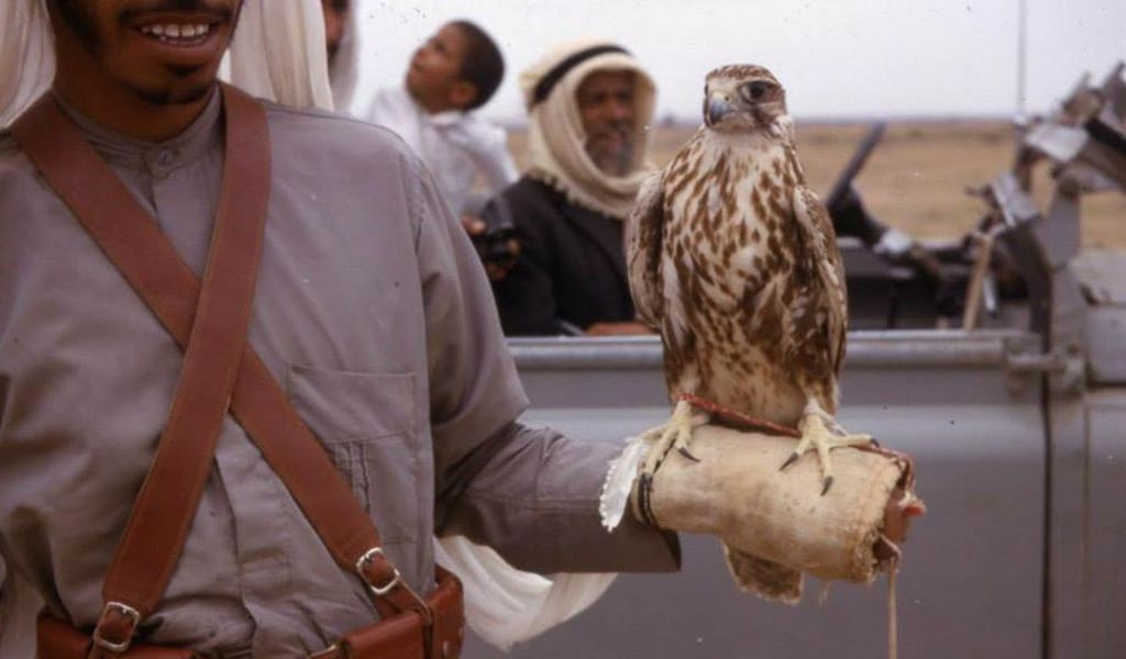 falcon-in-Dubai-historical-photo