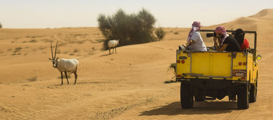 Best desert safari | How to choose the best Dubai desert safari