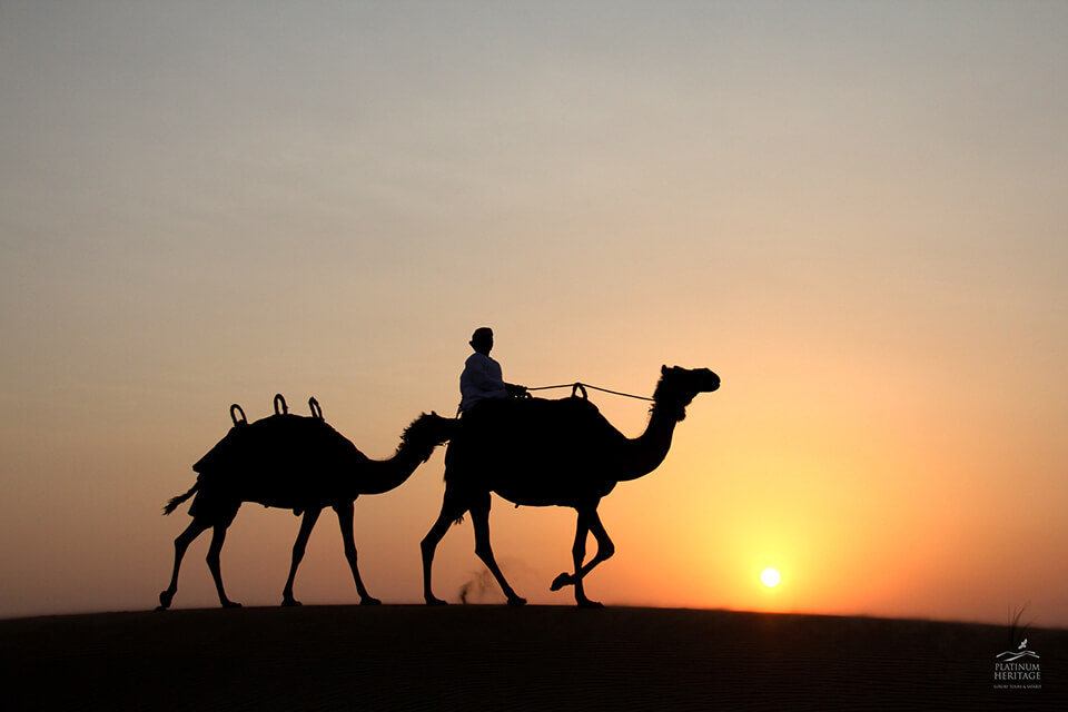 Camel Desert Safari Sunset