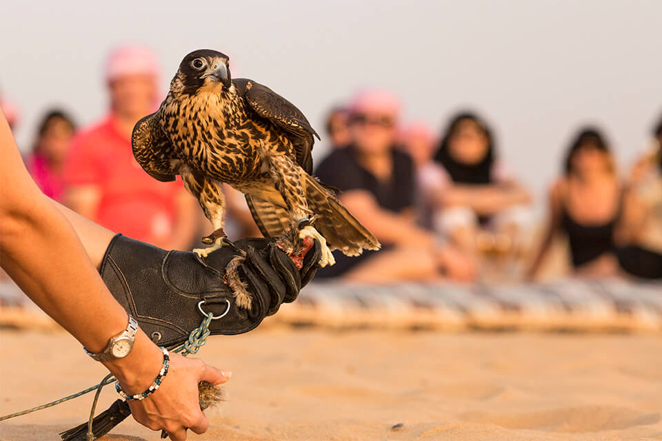 Falconry & Wildlife Morning Desert Safari