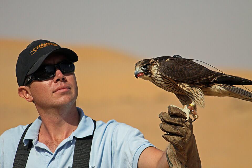 Falconry And Wildlife Safari