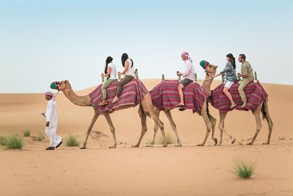 monring-camel-safari