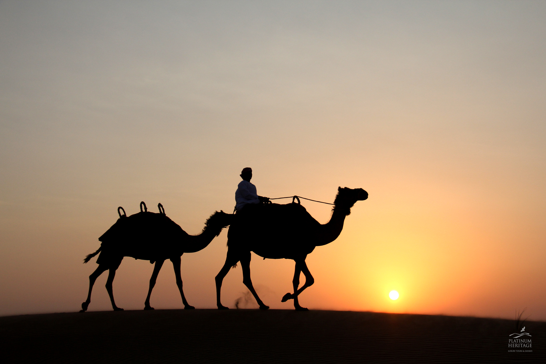 Camel Safari – A Must do in Dubai - Desert Safari Dubai ...