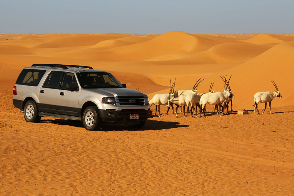 A Desert Safari in Dubai in Summer is not too hot