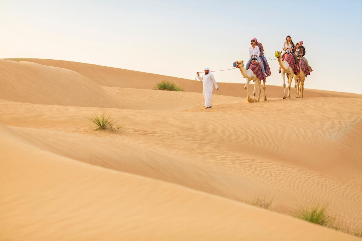 Treatment of Camels in Dubai