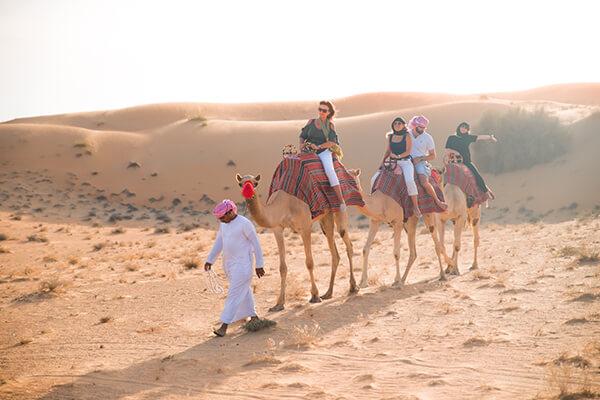 Camel Group Safari