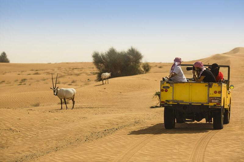 Heritage Desert Safari Dubai Land Rovers