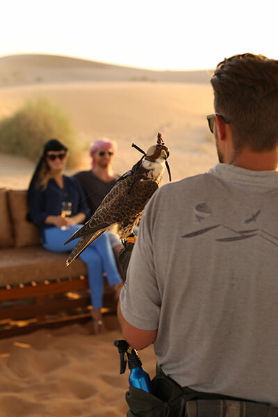 Dubai Falcon Shows – Everything you need to know