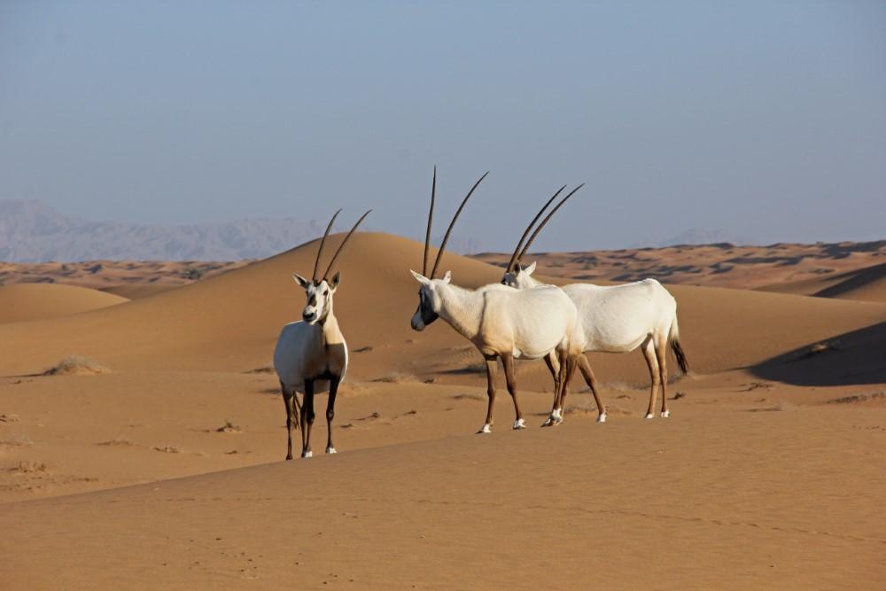 Platinum Heritage Dubai Desert Location