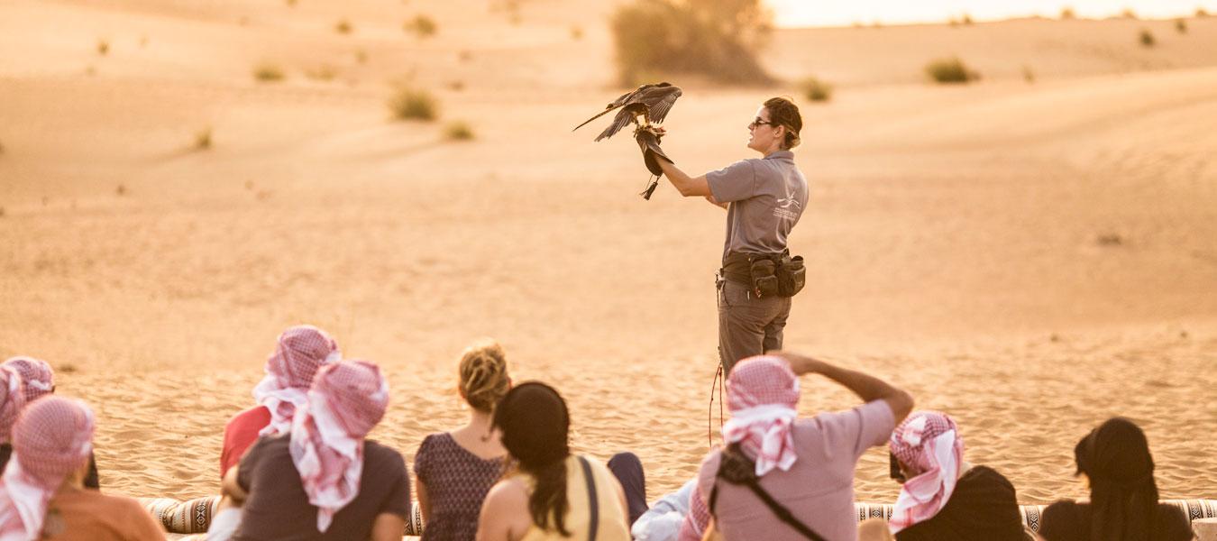Falconry Dubai