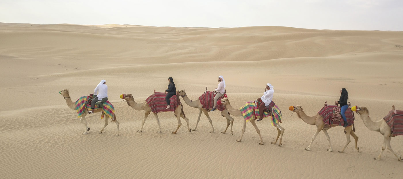 Camels Dubai