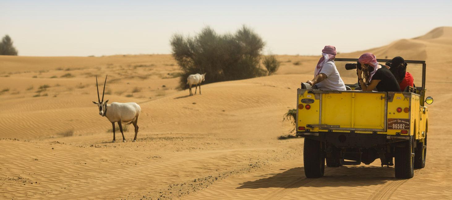 Wildlife Drive Dubai