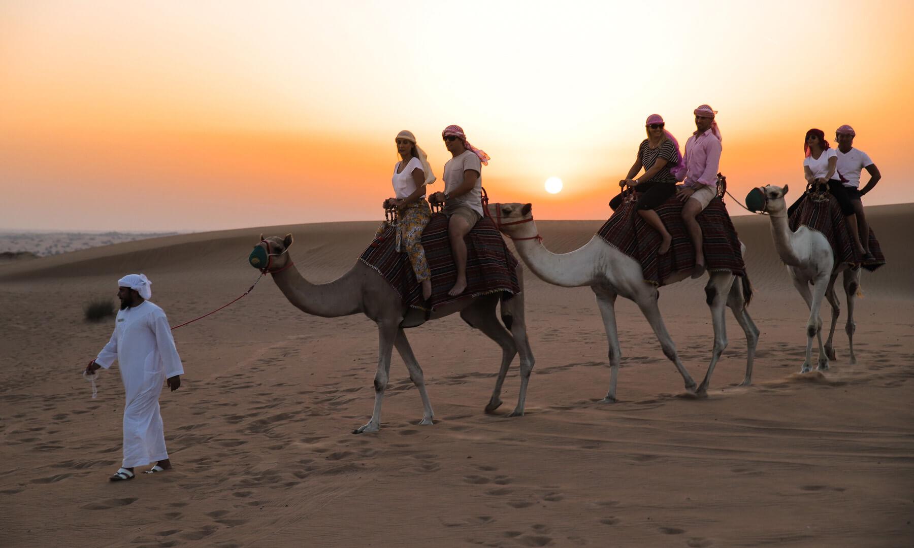 Platinum Camels
