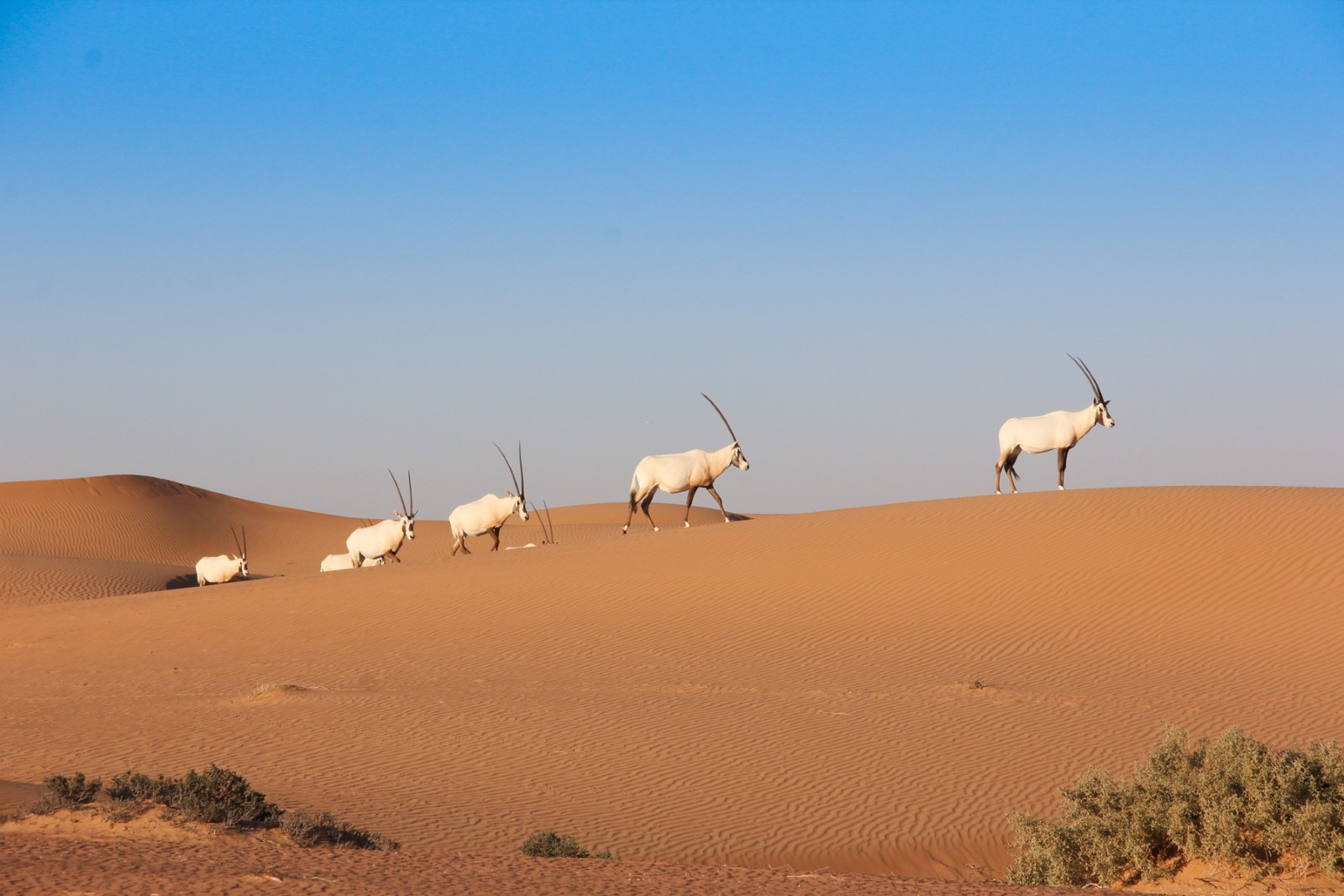 Desert Safaris that Make a Positive Difference in Dubai