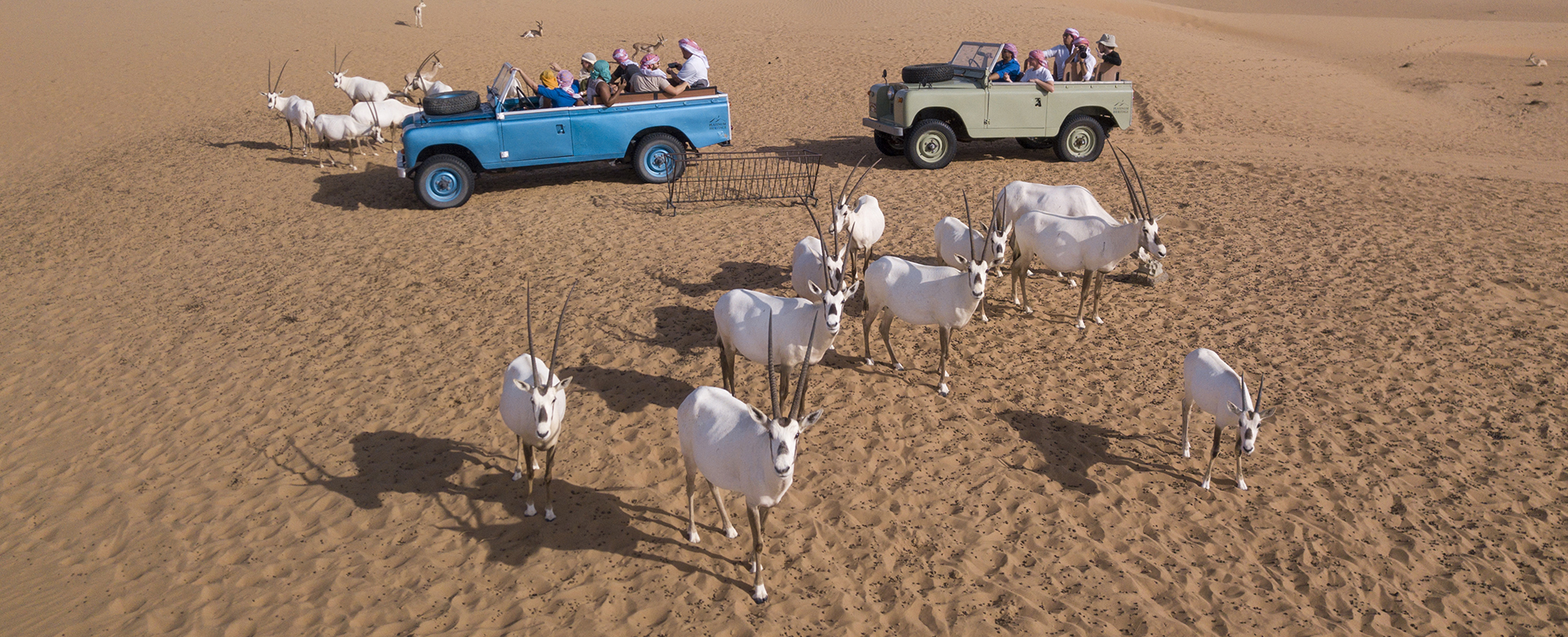 VIntage Land Rovers Dubai Desert Conservations Reserve
