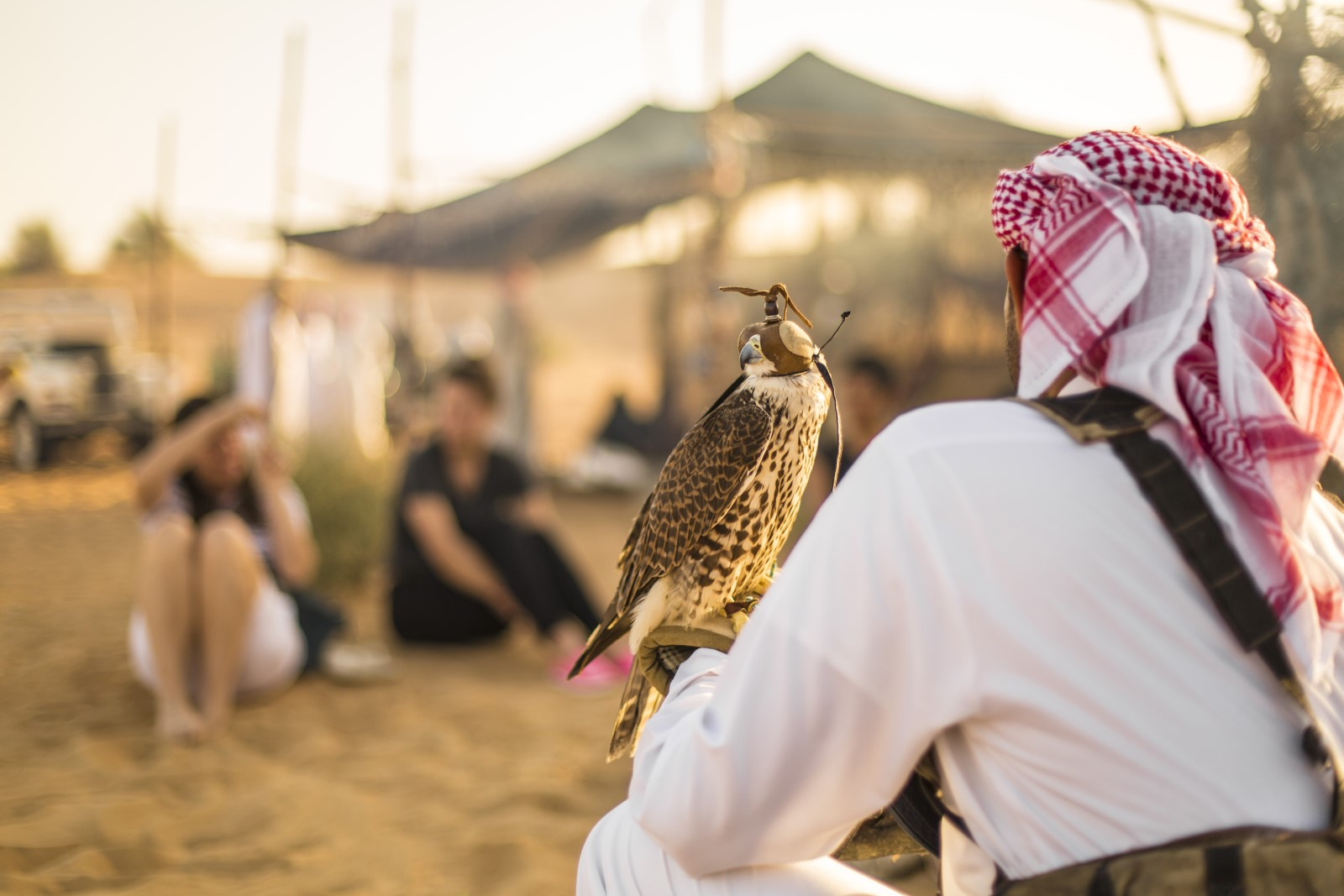 Ethical Falcon Shows in Dubai
