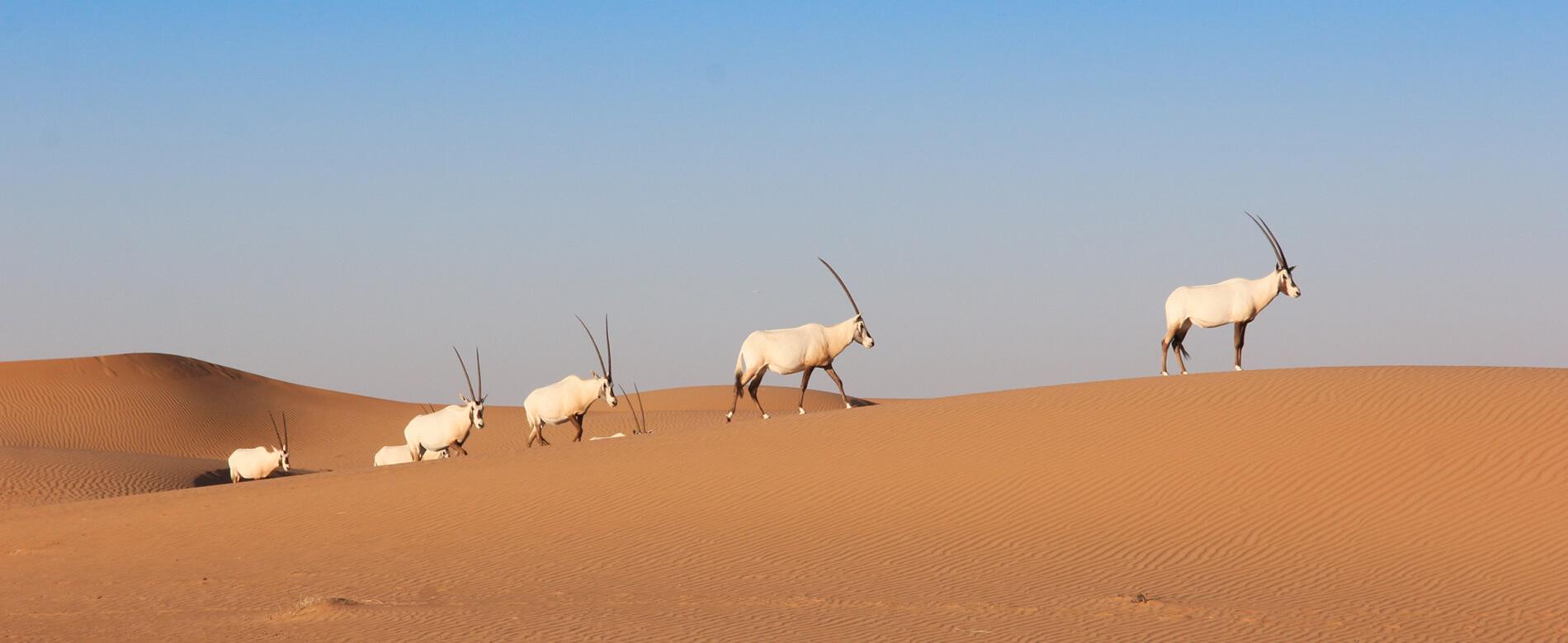Private Desert Safaris Dubai Wildlife
