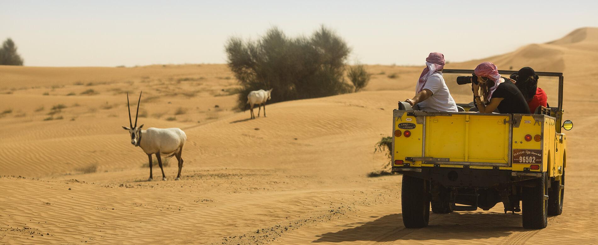 Private Desert Safaris Dubai Land Rover